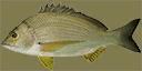 Fish1 - Fish1SAMP.txd