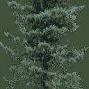 pinelo128 - XmasTree1.txd