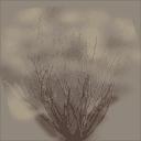 sm_des_bush1 - badlands.txd