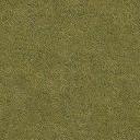 Grass_dry_64HV - burnsground.txd