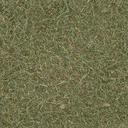 grasstype3 - casnorylgrnd.txd
