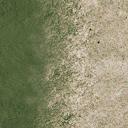 sw_sandgrass - CE_ground08.txd