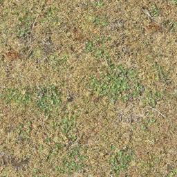 grassdeadbrn256 - chicano10_lae.txd