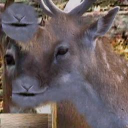 CJ_Deer1 - CJ_AMMO.txd