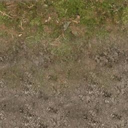 forestfloor256_blenddirt - cuntwland.txd