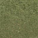grasstype4-3 - cuntwland.txd