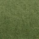 grasstype4_10 - cuntwland.txd