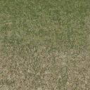 grasstype5_4 - cuntwland.txd