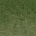 grasstype510_10 - cuntwlandcent.txd