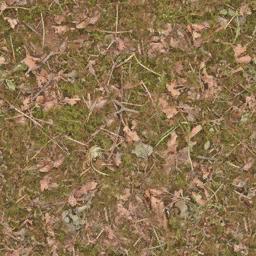 forestfloor3 - cuntwlandse.txd