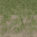 grass4dirtytrans - cuntwlandse.txd