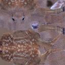 deer01 - deer01.txd