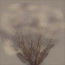 sm_des_bush1 - desert.txd