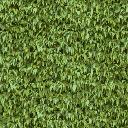 hedge1 - eastlstr_lae2.txd