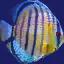 fish1 - fish3.txd