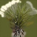 sm_minipalm1 - genintgtatrees.txd