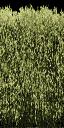 hedgealphad1 - glenpark1x_lae.txd