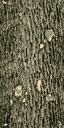 Gen_Log - GTA_brokentrees.txd