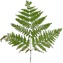 veg_bushgrn - gta_proc_ferns.txd
