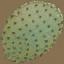 sm_cactus_leaf - gta_procdesert.txd