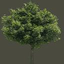 Newtreed256 - gta_tree_boak.txd