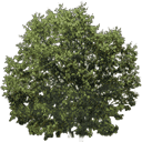 newtreeleaves128 - gta_tree_boak.txd