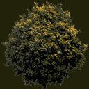 newtreeleavesb128 - gta_tree_boak.txd