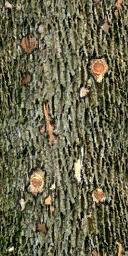 Gen_Log - gta_tree_oak.txd