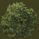 newtreeleaves128 - gta_tree_oak.txd