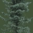 pinelo128 - gta_tree_oldpine.txd