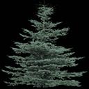 tree19Mi - gta_tree_oldpine.txd