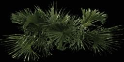 kbtree4_test - gta_tree_palm.txd