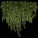 kb_ivy2_256 - gta_tree_pine.txd
