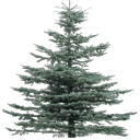 tree19Mi - gta_tree_pine.txd