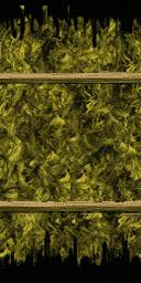 kmb_marijuana - kmb_marijtxd.txd