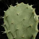 cactusL - labig3int2.txd
