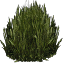 kbplanter_plants1 - lae2coast_alpha.txd