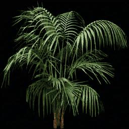 planta256 - lae2coast_alpha.txd
