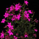 bevflower2 - lahills_wiresnshit3.txd