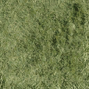 Bow_church_grass_alt - landshit_31_sfe.txd