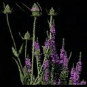 starflower1 - law_coffintxd.txd