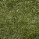 grassgrn256 - law_doontoon.txd