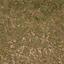 forestfloor3_forest - LODcunty.txd