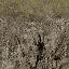 grassbrn2rockbrn_lod - lodvgsslod02.txd
