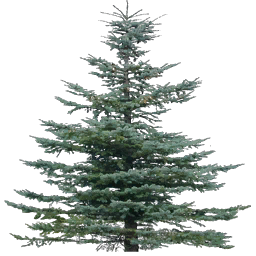 tree19Mi - mtbtrackcs_t.txd