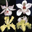hot_flowers1 - ottos2_sfw.txd