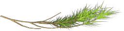 pinebranch1 - ottos2_sfw.txd