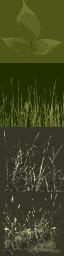 txgrassbig0 - particle.txd
