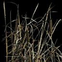 CJgrass - plants_designer.txd