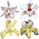 hot_flowers1 - plants_galss.txd